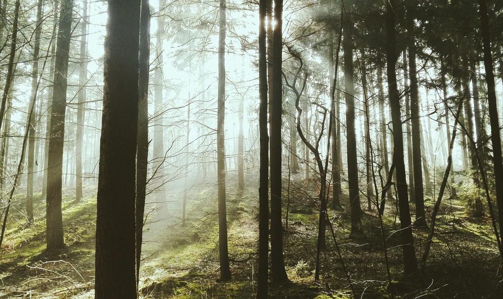 Vom Simonswäldertal auf den Kandel
