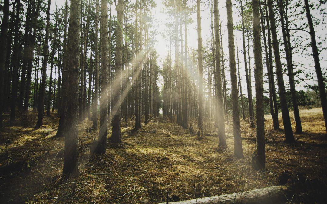 Rauf in den Hochschwarzwald