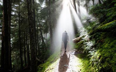 Ankündigung: Wanderung im Simonswäldertal